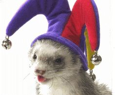 Click here for more adorable ferrets in cute jester hats!