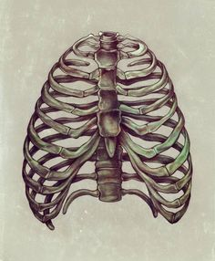 ribcage  hello zso  RIBS2.jpg
