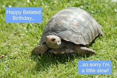 #Belated #Birthday #Tortoise