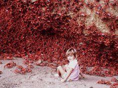 Red Crabs of Christmas Island - There are over 120 million crabs on the island. During the late fall/early winter months, this massive onslaught of pinching-sea creatures collectively makes its way to the ocean to mate.