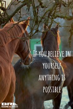 If you believe in yourself anything is possible. horse quote #BRLEquine #believeinyourself #equestrian