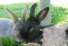 Bye Blue bunny. Bye funny bunny.