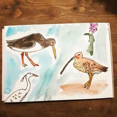 godwit drawing - Google Search Moose Art, Google Search, Drawings, Animals, Inspiration, Sketches, Animales, Biblical Inspiration, Animaux