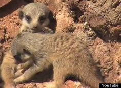 Cute Animals : Pictures, Videos, Breaking News