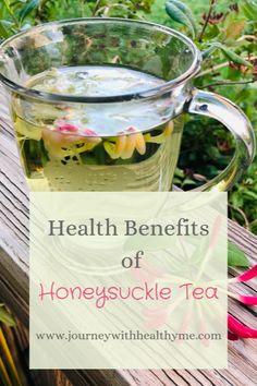 Health Benefits of Honeysuckle Tea - Journey With Healthy Me Honeysuckle Tea Making Honeysuckle Tea Honey Benefits, Tea Benefits, Health Benefits, Health Tips, Herbal Remedies, Health Remedies, Natural Remedies, Honeysuckle Plant, Tea Recipes