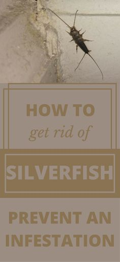 Silverfish bugs are one of the most annoying bugs that might come in to destroy your property. Thus, learn how to get rid of silverfish with this article. Termite Pest Control, Diy Pest Control, Weed Control, Silverfish Control, Get Rid Of Silverfish, Termite Inspection, Bug Off, Cleaning Recipes, Cleaning