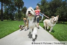 Walking Your Dog: How to Do It Well and Why It's So Important  http://ow.ly/9FmeY