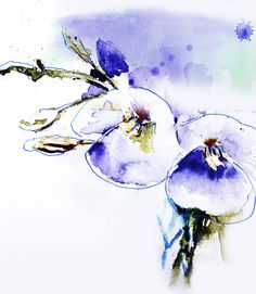 Perennial. Watercolor & Ink By Dave Butler