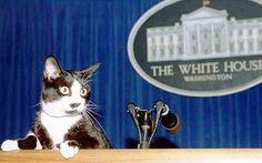De ruina mundi: Alla Casa Bianca … gatta ci cova
