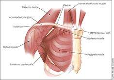 Pain Around The CollarBone Area - Clavicle Pain