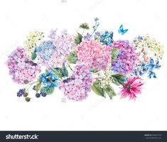 Summer Watercolor Vintage Floral Bouquet With Blooming Hydrangea And Garden Flowers, Watercolor Botanical Natural Hydrangea Illustration Isolated On White - 445631164 : Shutterstock