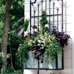Spectacular Container Gardens: White Flowers & Dark Foliage - Southern Living - A blank wall becomes a work of art with the addition of a planter. White flowers and black-green foliage are dramatic, echoing the Gothic style of the planter's ironwork. Lawn And Garden, Garden Art, Garden Design, Home And Garden, Garden Ideas, Fall Window Boxes, Window Planter Boxes, Planter Ideas, Container Plants