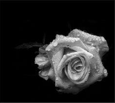 L'Epoché: Possachi porta fiori questa notteavere la luce del...