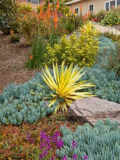 Drought Tolerant Garden Design, Pictures, Remodel, Decor and Ideas - page 76