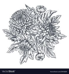 Vector bouquet with black and white hand drawn chrysanthemum flowers in sketch style. Beautiful Flower Drawings, Flower Line Drawings, Botanical Line Drawing, Floral Drawing, Drawing Flowers, Chrysanthemum Drawing, Sunflower Illustration, Sketch Style, Realistic Rose