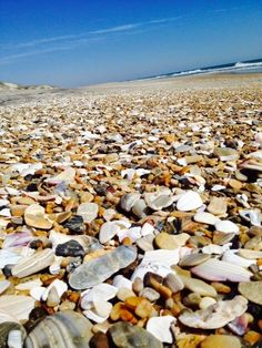 Sea Shells on Pea Island National Wildlife Refuge :: Outer Banks of North Carolina