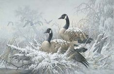 Larry Fanning April Snow Canada Geese