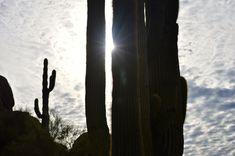 Annabanana: Pinnacle Peak Park, AZ