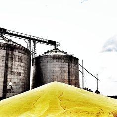 Montanha de milho. Alegria da galinha. Mato Grosso do sul. Foto de Chris Alcazar