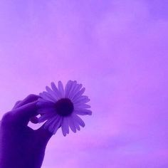 violet flower aesthetic results - ImageSearch Violet Aesthetic, Lavender Aesthetic, Rainbow Aesthetic, Aesthetic Colors, Flower Aesthetic, Aesthetic Photo, Aesthetic Pictures, Dark Purple Aesthetic, Sky Aesthetic