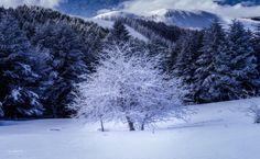 White Tree by Shumon Saito on 500px