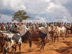 Zebu-market in Madagascar.  Photo: Letty Visser