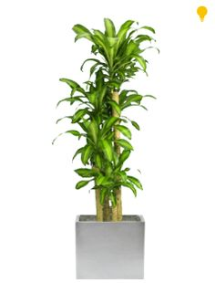 1000 images about plants for g m on pinterest low for Low maintenance plants for office