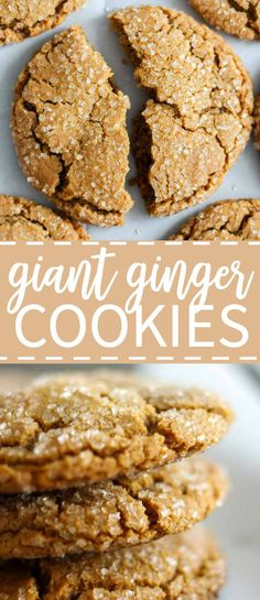 Giant ginger cookies and a sprinkling of sugar make the holidays go ground. Soft and chewy and as big as your hand and filled with molasses, ginger and cinnamon.