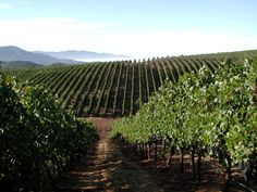 One of my MOST FAVORITE places ever!...Napa Valley, California - and the wineries that go with it  ;)