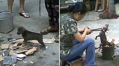 """""""Stray Puppies Being Cooked Alive in Eastern China"""" Stephen Messenger TreeHugger OMG stop humans from hurting animals. What stupid thinking goes on in someone's head? OMG"""