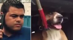 PETITION, PLEASE SIGN AND SHARE! Miami Dade Shelter employees ram cart into restrained dog several times! Act Now! | YouSignAnimals.org