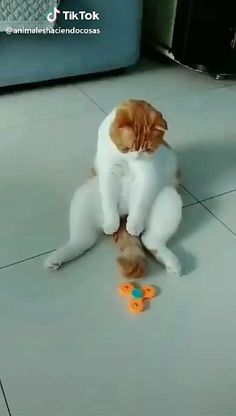 """Pet Fish Toy Length: & & & Material: Plush Type: 6 Types Fish Shapes""""},""""story_pin_data_id"""":null,""""carousel_data"""":null,""""method"""":""""photos Funny Cat Memes, Funny Cat Videos, Wtf Funny, Cats Humor, Kitten Videos, Chat Funny, Funniest Jokes, Humor Videos, Funny Art"""