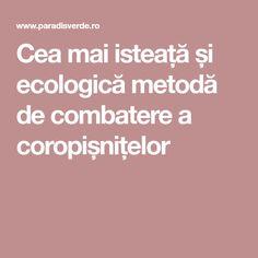 Cea mai isteață și ecologică metodă de combatere a coropișnițelor Mai, Plant