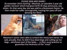 Please Sign & Share everywhere, this has to be stopped #JusticeForMaoMao >>> http://www.yousignanimals.org/Justice-for-Maomao-Chinese-pet-dog-snatched-from-loving-owner-and-sold-to-restaurant-for-her-meat-t-800 …