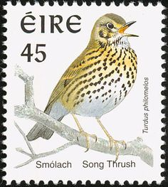 Song Thrush stamps - mainly images - gallery format Song Thrush, Irish Songs, Wild Creatures, Flora And Fauna, Mail Art, Stamp Collecting, Postage Stamps, Pet Birds, Gallery