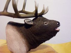 Calls from the Wild...Part 1 by M.A.Dellinger Wood Carving on Etsy