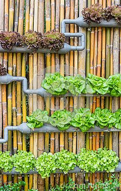 Jardinage hydroponique de verticale