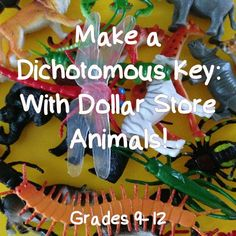 FREE For a Limited Time! Instructions to help your students make their own dichotomous key with those packs of dollar store animals! For Grades Biology Classroom, Biology Teacher, Teaching Biology, Science Biology, Life Science, Biology Experiments, Ap Biology, 6th Grade Science, Science Curriculum