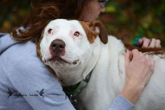 Washington Humane Society - Flo | Flickr - Photo Sharing!
