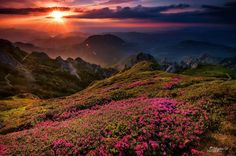 Rhododendon fields in the high Ciucas Mountains at sunset Faerie Magazine's photo. Champs, Mountain Sunset, Mountain View, Sunset Wallpaper, Hd Wallpaper, Great Pictures, Beautiful World, Beautiful Scenery, The Great Outdoors