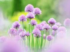 Resultado de imagen de brillantes color lila
