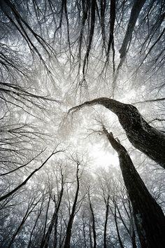 mystic-revelations: Winter Tree By S.Y. BAE
