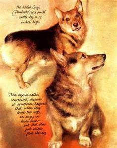 Rien Poortvliet's Dogs                                 lb xxx.