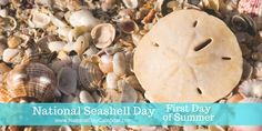 "Are you ready to shellebrate? Today is #NationalSeashellDay here is a list of ""Tips for Shellers"" to help success..."
