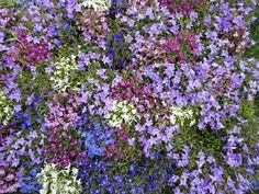 Nagoya wild flower garden