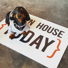 Moko is ready for the Open House weekend, are you? www.allthingsrealestatestore.com