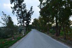Cyprus Nature World, Larnaca road near the Salt Lake
