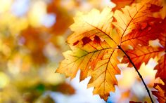 #las hojas de otoño, #bokeh, #colores, #2560x1600, #otoño, #deja, #naturaleza