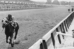 Secretariat. famous finish, jockey is looking for other horses