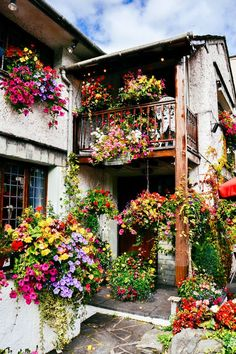 Most Design Ideas Beautiful Garden Scene Colour Flowers Plants Nature Pictures, And Inspiration – Modern House Design Beautiful Flowers, Beautiful Places, Romantic Places, Container Gardening, Planting Flowers, Flowers Garden, Flower Arrangements, Bloom, Instagram